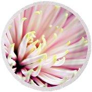 Pink Chrysanthemum Round Beach Towel