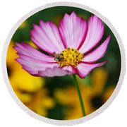 Pink Cosmos Picotee And Bee Round Beach Towel