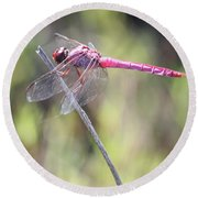 Pink Dragonfly In The Marsh Round Beach Towel