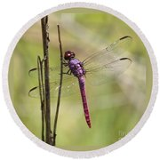 Pink Dragonfly With Sparkly Wings Round Beach Towel