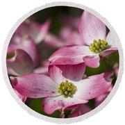 Pink Flowering Dogwood - Cornus Florida Rubra Round Beach Towel