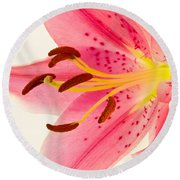 Pink Lily Square Version Round Beach Towel
