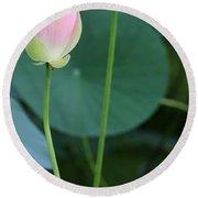 Pink Lotus Buds Round Beach Towel
