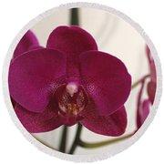 Pink Phalaenopsis Orchid  Round Beach Towel