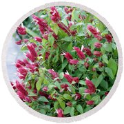 Pink Shrimp Plant Round Beach Towel