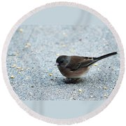 Pink-sided Junco Round Beach Towel