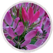 Pink Spider Flower Round Beach Towel