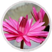 Pink Water Lily Duo Round Beach Towel