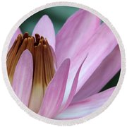 Pink Water Lily Macro Round Beach Towel by Sabrina L Ryan