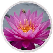 Pink Water Lily Rose Arey With Bee Round Beach Towel