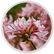 Pinxterflower Azalea Round Beach Towel