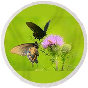 Pipevine Swallowtails In Tandem Round Beach Towel