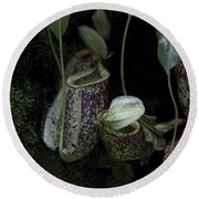 Pitcher Plant Inside The National Orchid Garden In Singapore Round Beach Towel