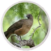 Plain Chachalaca  Round Beach Towel