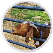Please Exonerate Me - Billy Goat Round Beach Towel