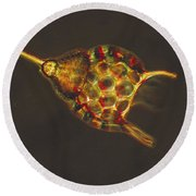Podocyrtis Triacantha Lm Round Beach Towel