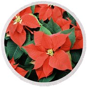 Poinsettia Varieties Round Beach Towel