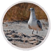 Poised Seagull Round Beach Towel