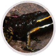 Poison Arrow Frog With Tadpoles Round Beach Towel