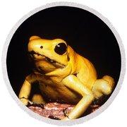 Poison Dart Frog Round Beach Towel