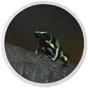 Poisonous Green Frog 03 Round Beach Towel