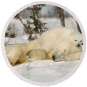 Polar Bear With Cub In Snow Round Beach Towel