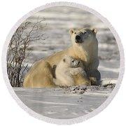 Polar Bear With Cub, Watchee Round Beach Towel