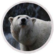 Polar Bear With Waterfall Round Beach Towel