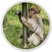 Pole Dancing Macaque Style Round Beach Towel