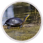 Pond Turtle Basking In The Sun Round Beach Towel