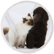 Poodle Pup And Cat Round Beach Towel