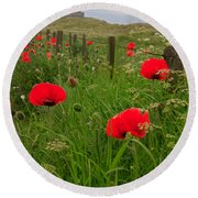 Poppies By The Roadside In Northumberland Round Beach Towel