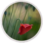 Poppies Mood Round Beach Towel