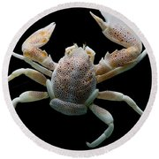 Porcelain Crab Round Beach Towel