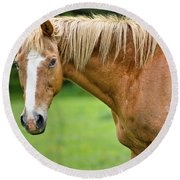 Portrait Of A Horse Round Beach Towel