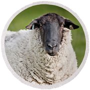 Portrait Of A Sheep Round Beach Towel