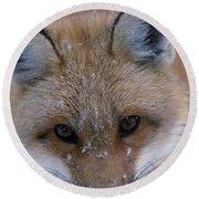 Portrait Of Adult Red Fox Round Beach Towel