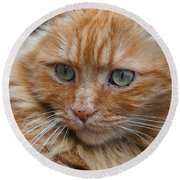 Portrait Of An Orange Kitty Round Beach Towel