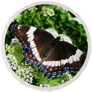 Posing Butterfly Round Beach Towel