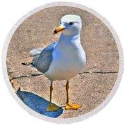 Posing Gull Round Beach Towel