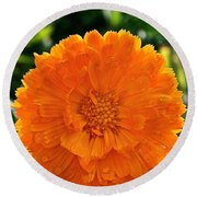 Pot Marigold  Round Beach Towel