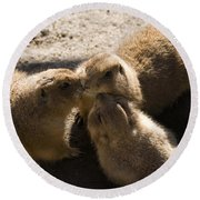 Prairie Dog Gossip Session Round Beach Towel