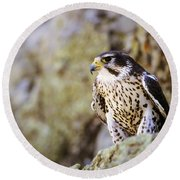 Prairie Falcon On Rock Ledge Round Beach Towel