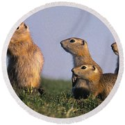 Prarie Dog Family Round Beach Towel