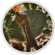 Prickly Lunch  Round Beach Towel