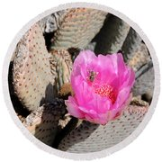 Prickly Pear Cactus Fertilized By Honey Bee Round Beach Towel