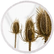 Prickly Teasels On White Round Beach Towel