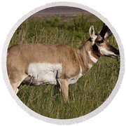 Pronghorn Male Custer State Park Black Hills South Dakota -1 Round Beach Towel