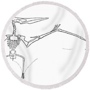Pteranodon Longiceps Round Beach Towel