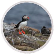 Puffin With Sand Eels Round Beach Towel